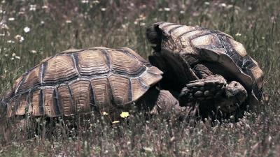 Avara luonto: Kilpikonnien salattu elämä